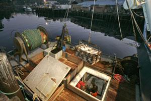 At the Caito Fisheries dock, workers unload groundfish from the icy hold of the trawler.