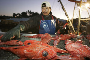 A crewman sorts through the catch on a trawler in Noyo Harbor. Photo by Michael Maloney, S.F. Chronicle